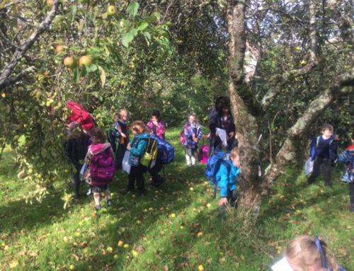 Junior Infants Nature Walk
